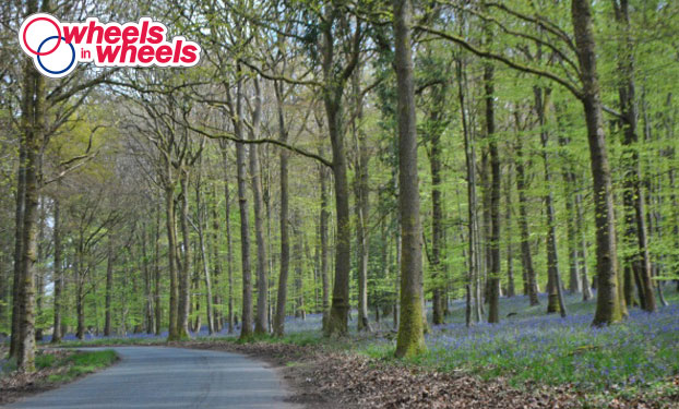 forest of dean spring classic cycling bluevbell forest